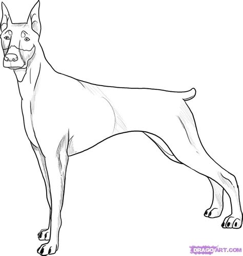 how to draw a doberman step by step pets animals free