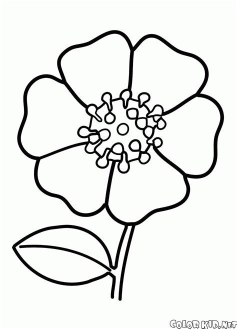 diferentes imagenes para dibujar bonitas imagenes para dibujo para colorear flor