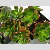 Green Roses Images | 1024 x 768 jpeg 114kB
