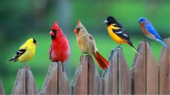 colored birds 30 bird pictures with most beautiful colors