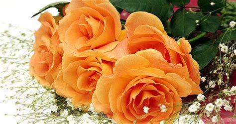 top wallpaper bunga