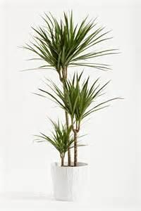 zimmerpflanzen schneiden so geht s bl 252 tenrausch