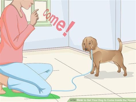 dog trainer that comes to your house 3 ways to get your dog to come inside the house wikihow
