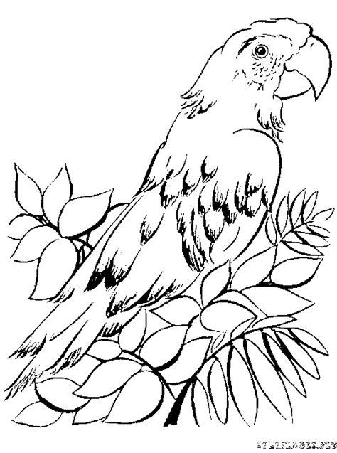 coloriage Beau Perroquet gratuit - Animaux