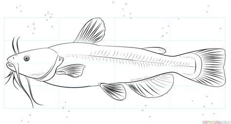 draw  catfish step  step drawing tutorials
