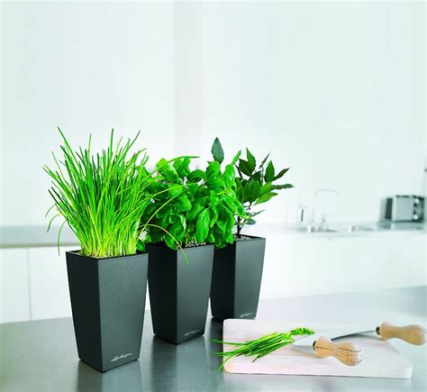 Mini Planters by Lechuza Mini Cubi Self Watering Planter Metropolitan