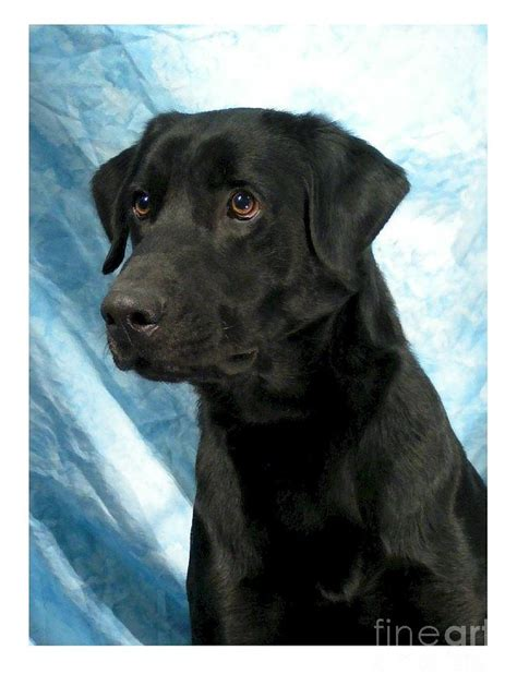 Labrador Retriever Artwork by Labrador Retriever 632 Digital Art By Larry Matthews