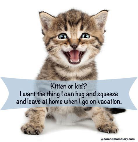 St Cat Kid kitten or kid marital advice for the 21st century