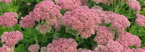 garden resources and trends fall blooming perennials meadows farms fall resources great plants for fall