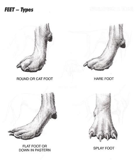 paw anatomy paw anatomy diagram free engine image for user manual