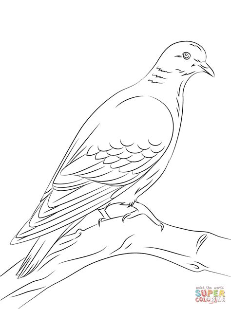 Stock Dove coloring page | Free Printable Coloring Pages