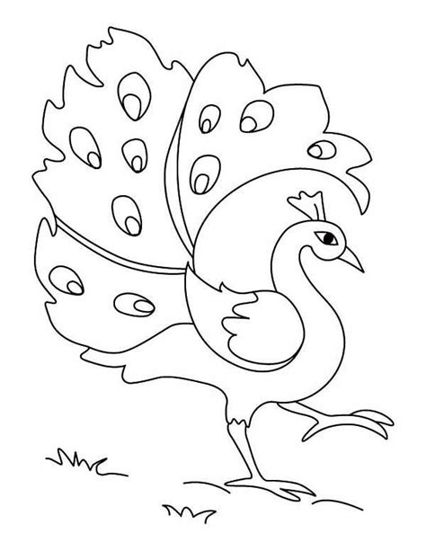 simple peacock coloring page peacock simple drawing of green peacock coloring page