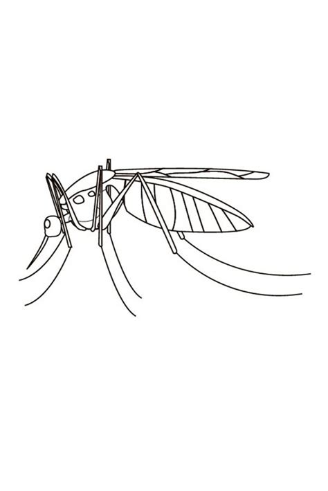 printable mosquito coloring pages  kids