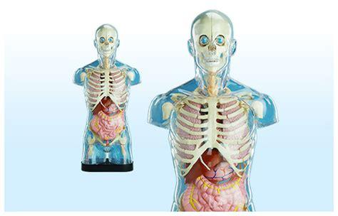 tremori interni in tutto il corpo modello corpo umano per bambini abiti donna