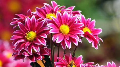 images of flowers beautiful flowers wallpapers pictures images