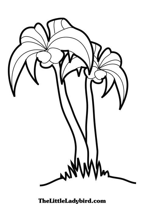 palm tree template az coloring pages sabal palm coloring page coloring pages