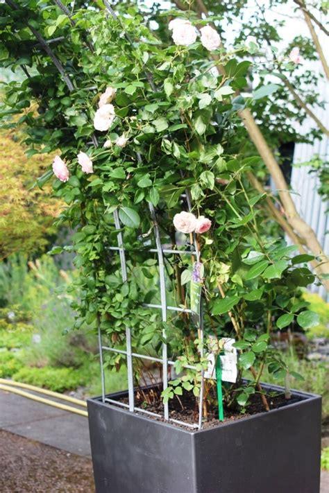 winterharte bepflanzung im topf t pfe pfannen produkte sia f r ein sch