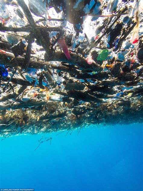 Plastik Di caribbean oceans are choked by plastic bottles and rubbish