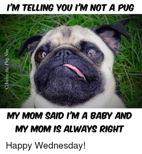 im a pug search no matter how i get i always want my when i don t feel memes on me me