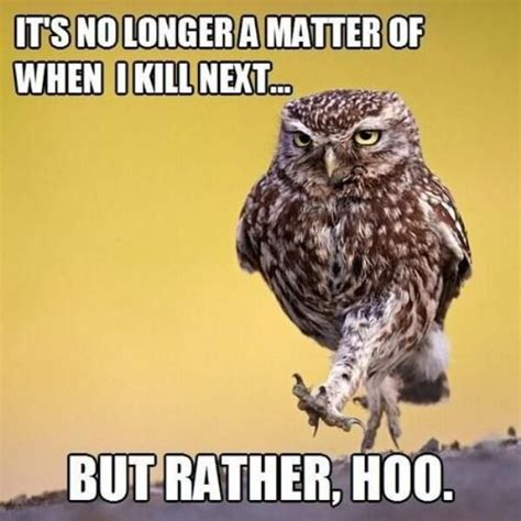 Who Owl Meme - perfect puns that you can t help but find funny 20 pics