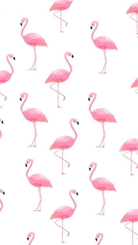 pin  carol yates   paper flamingo wallpaper