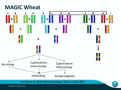 Wheat Magic by 2015 Huang Challenges And Advantages Of Magic Map