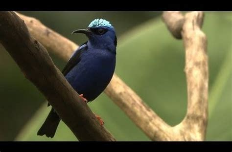 cornell bird watching website the cornell lab of ornithology channel lots of amazing of birds ornithology