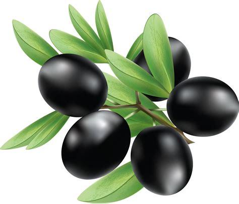 olive clipart black olives clipart www pixshark com images galleries