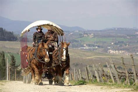 cavalli da carrozza i cavalli e la carrozza foto di i cocchieri di chianti