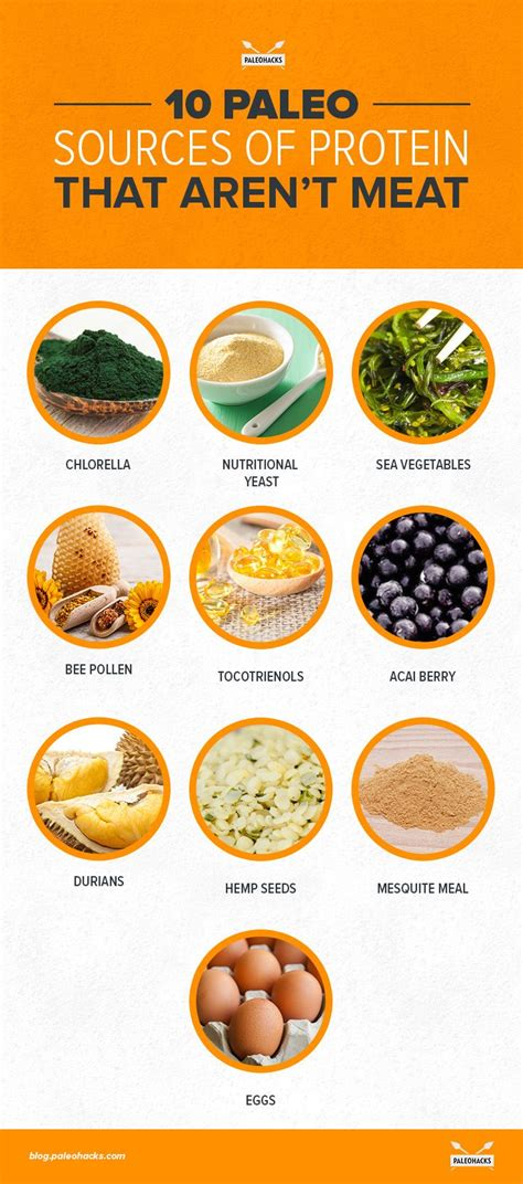 protein food sources the top 10 best non protein sources paleohacks