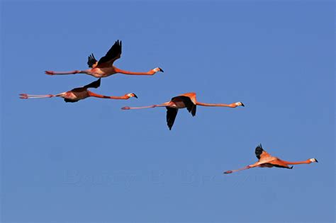 coral reef photos 187 blog archive 187 flying flamingo s