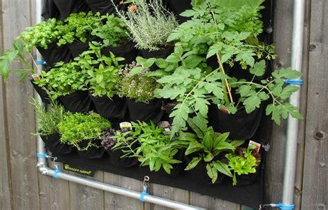 coltivare le in vaso come coltivare le aromatiche in vaso