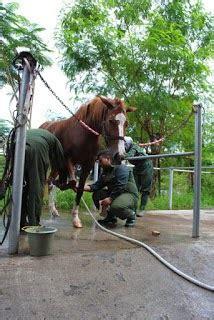 Sho Kuda Ukuran Kecil kandang kuda