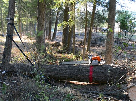 How We Prepare Trees For Our Homemade Chainsaw Mill Pure