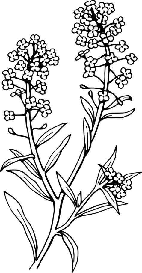 Pohon Bunga Aster Purple Aster 22 plant designs