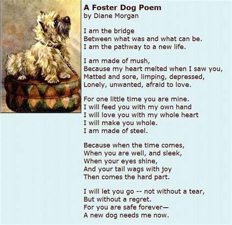 foster dogs foster poem what i care about