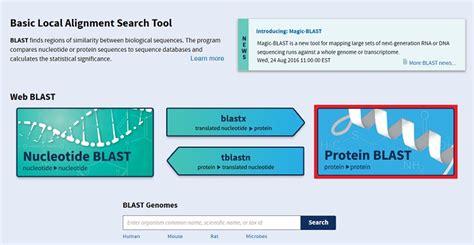 protein blast blast compare identify sequences ncbi bioinformatics