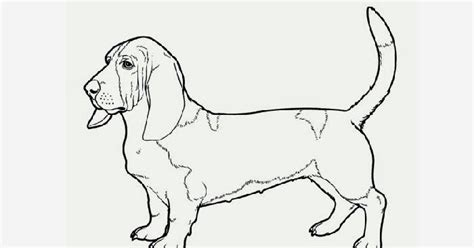 coloring page hawaii basset hound coloring page free coloring pages and