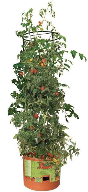 Yfa Pl Wlb24 Bag 15 best tools to grow your own tomatoes and potatoes