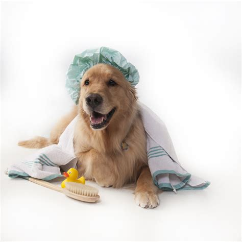 dogs and bathtubs pet photography dog portraits alison miniter