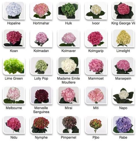 flowers by color hydrangeas by color via hyperactive farms flower