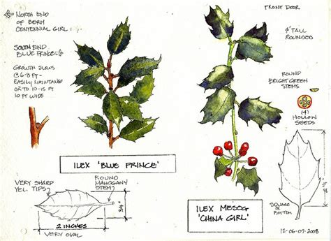 watercolor holly tutorial 17 best images about watercolor christmas card ideas on