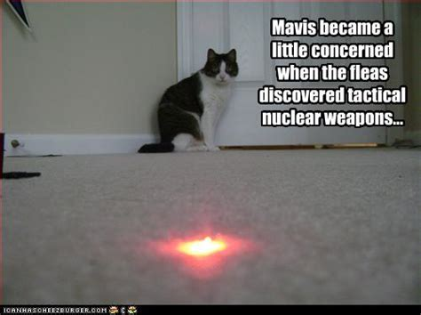 Laser Cat Meme - fleas discover tactical nukes funny cat pictures with