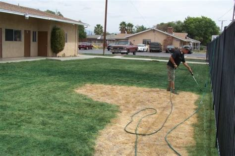 spray painting grass green californians pay to their lawns spray painted green