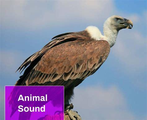 animal sound  mp  mingo sounds