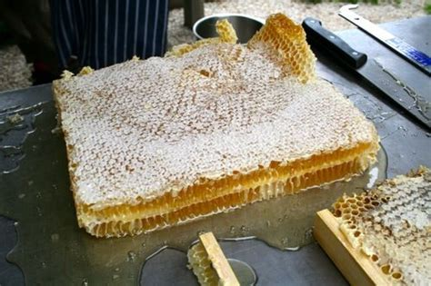 how to extract honey from a top bar hive 86 best bee unit images on pinterest bees day care and bugs