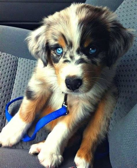 cross breed dogs these 25 cross breed dogs will make you fall in with mutts bored panda