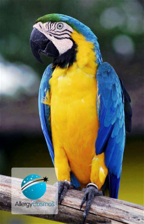 dander allergy dealing with parrot dander allergy cosmos