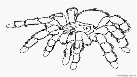 spider outline coloring page spiders coloring pages free coloring pages