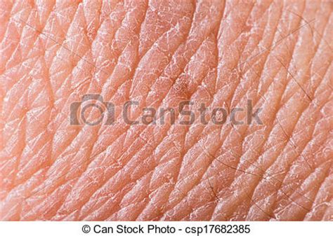 human skin macro picture stock photo 169 jugulator 25119063 skin clipart clipart panda free clipart images